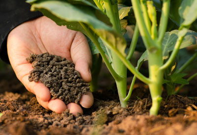 Indian Fertilizer Market is Expected to Reach INR 11,116 Billion by 2024 - IMARC Group