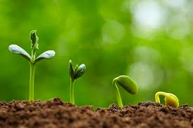 Agricultural Inoculant Market – Emerging Trends may Make Driving Growth Volatile | Brettyoung, Xitebio Technologies, Verdesian Lifesciences