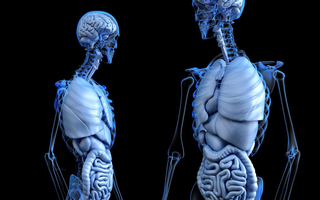 Global Artificial Organs Market Size to Expand at a CAGR of 9.5% during 2019-2024 | IMARC Group