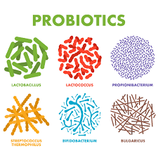 Probiotics Market - Size is estimated to reach value US$ 13.4 Billion by 2022
