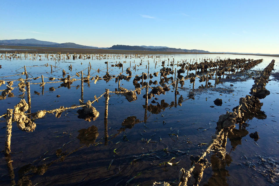 Oyster Farming Market increasing demand with key players France Naissain Group, Huitres Favier Earl, Tomales Bay Oyster