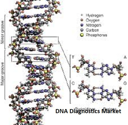DNA Diagnostics Market is Expected to Witness a Steady Growth by 2020