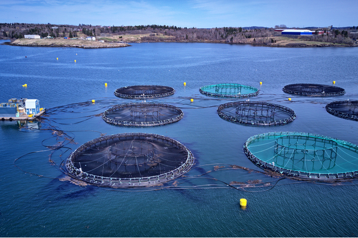 Aquaculture Market Revenue Projected to Reach $242 Billion by 2022, Growing Demand with CAGR of 5.3% during forecast period   Allied Market Research