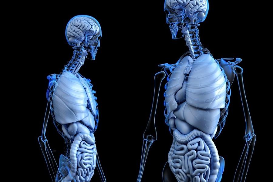 Nerve Repair Biomaterials Market In 2019   Prominent Players: Stryker, axogen, Checkpoint Surgical, Medtronic, Boston Scientific, Polyganics BV, Abbott, LivaNova, Nuvectra, Baxter