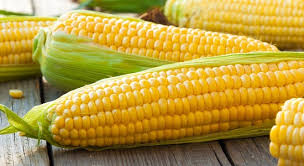 Corn Based Ingredients Market Boosting the Growth Worldwide: Market Dynamics And Trends, Efficiencies Forecast 2024