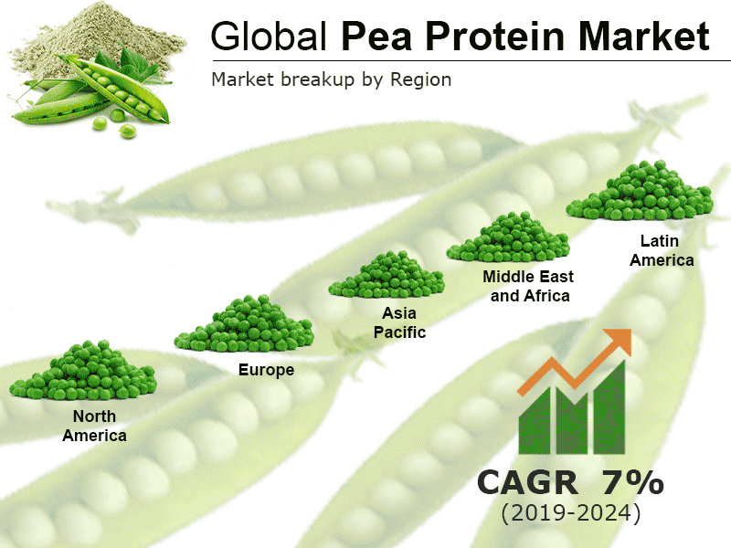 Pea Protein Market Report, Global Industry Overview, Growth, Opportunities and Forecast 2019-2024