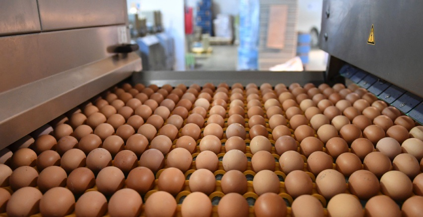 Processed Eggs Market Getting Larger With Great CAGR By 2026: Michael Foods, ACTINI SAS, Cal-Maine Foods, Moba Group, Noble Foods Ltd, Rembrandt Foods, Tyson Foods, Rose Acre Farms, Interovo Egg Group