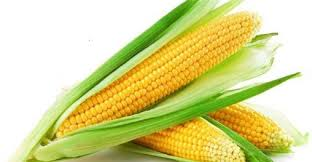 Global Maize (Corn) Seed Market 2019 Trends, Market Share, Industry Size, Growth, Sales, Opportunities, Analysis and Forecast To 2025