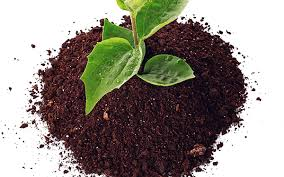 Global Biochar Market 2019 Trends, Market Share, Industry Size, Opportunities, Analysis and Forecast To 2024