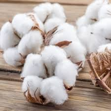 Organic Cotton Fiber: Latest Market Estimates Showing Surprising Stability in key Business Segments