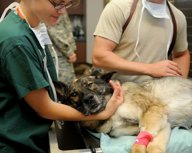 Veterinary CBD Market – 2019 Size, Revenue, Growth, Share, Trends, Competitive Landscape, Regional Analysis With Global Industry Forecast To 2025