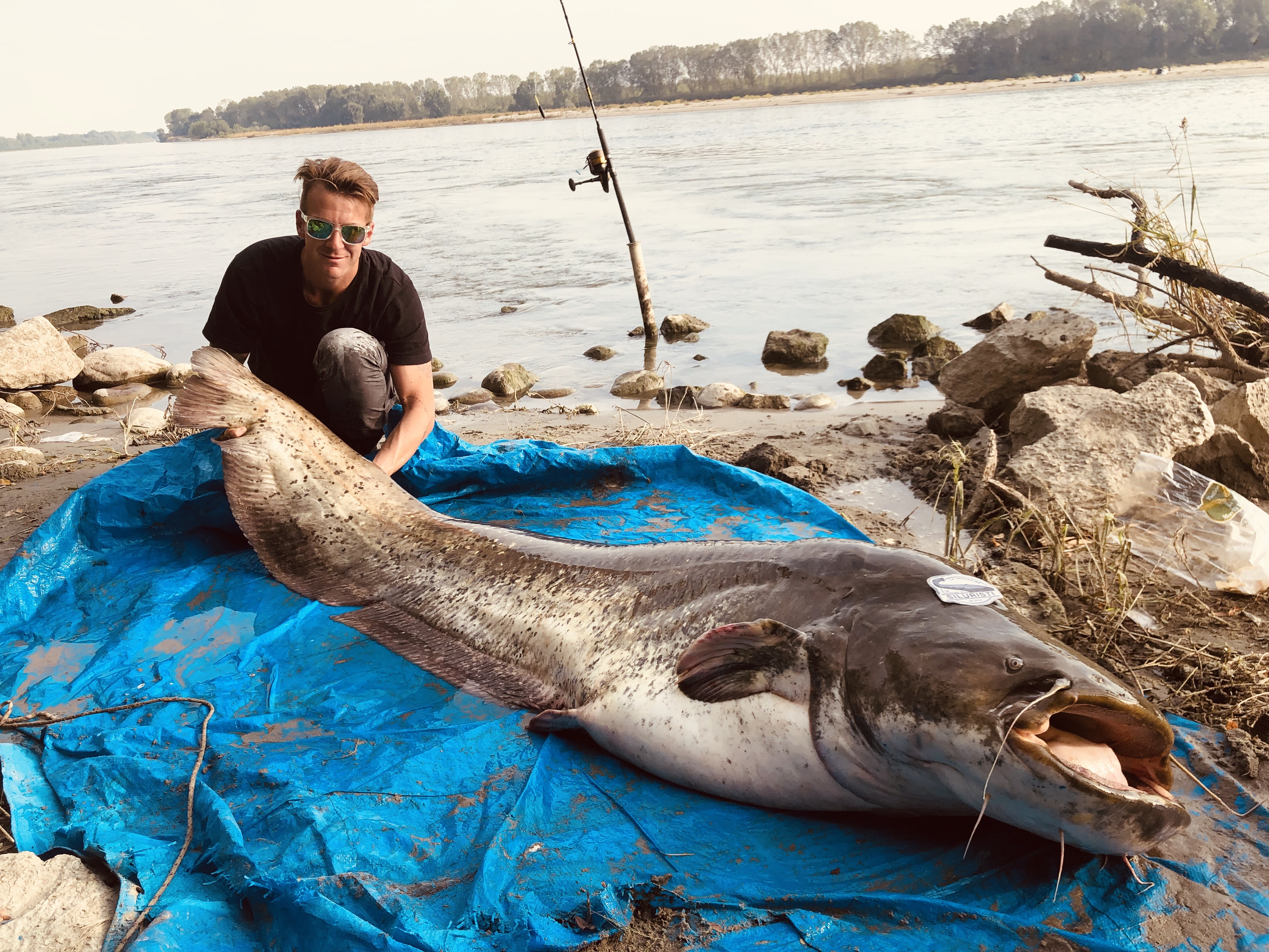 Phill Guidetti Catches Specimen of Catfish of 2.30 Meters Long At The River \