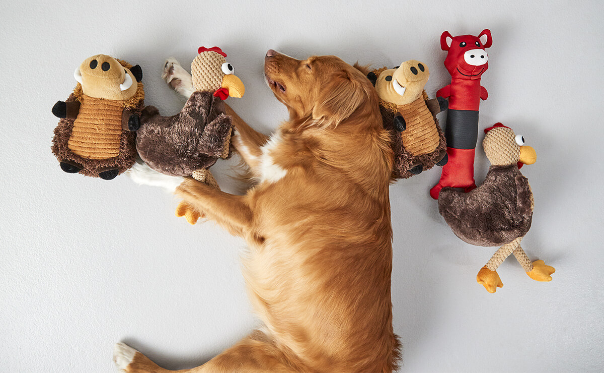 Pet Toys Market 2019 Business Scenario – Bradley Caldwell, Petstages, Kyjen, Hartz, Jw Pet