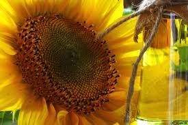 Organic Sunflower Oil market to develop to arrive at 15800 Million USD in 2019 with a CAGR of 4.91% during the period 2019-2025.