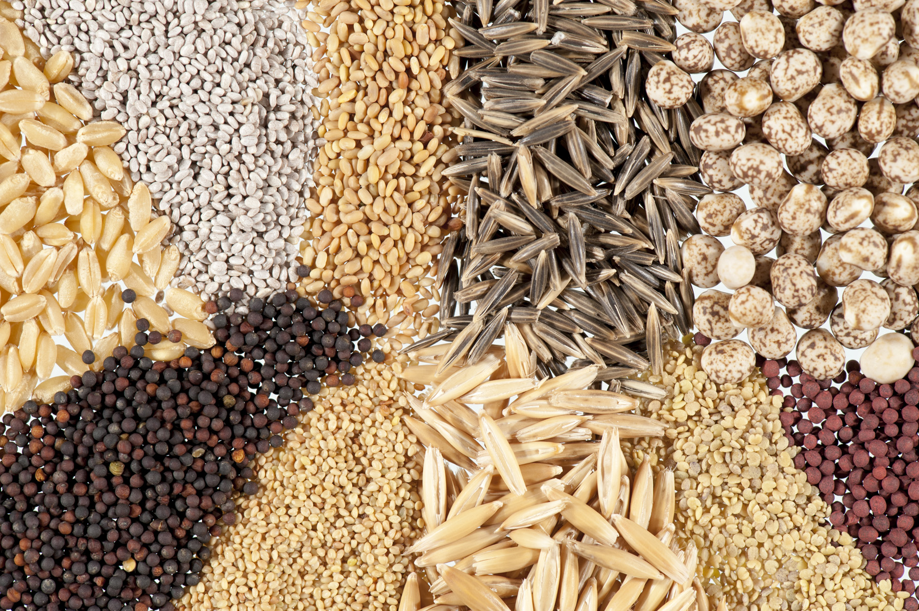 List of Top 5 Key Players in Global Seeds Market 2019