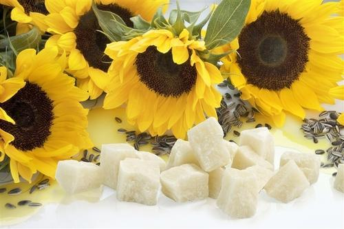 Sunflower Wax Market Emerging Trends and Strong Application Scope by 2024