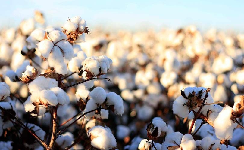 Organic Cotton Market Incredible Possibilities, Growth with Industry Study, Detailed Analysis and Forecast to 2025