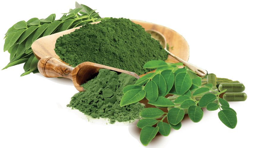Moringa Products 2019 Market Company Profile,Capacity,Production,Price,Cost,Gross Market and Revenue Market Report