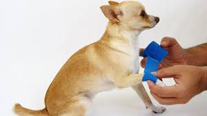 Animal Wound Care Market to Witness Massive Growth by 2025: Key Players Ethicon, 3M, Medtronic, Animal Medics