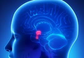 Acromegaly Treatment Market Is Thriving including key players Novartis, IPSEN & Pfizer