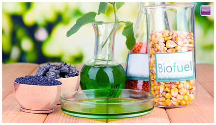 Biodiesel Global Market Analysis, Company Profiles and Industrial Overview Research Report Forecasting to 2025