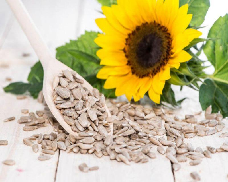 Sunflower Seeds Industry Sales, Supply and Consumption 2020 Analysis and Forecasts to 2026