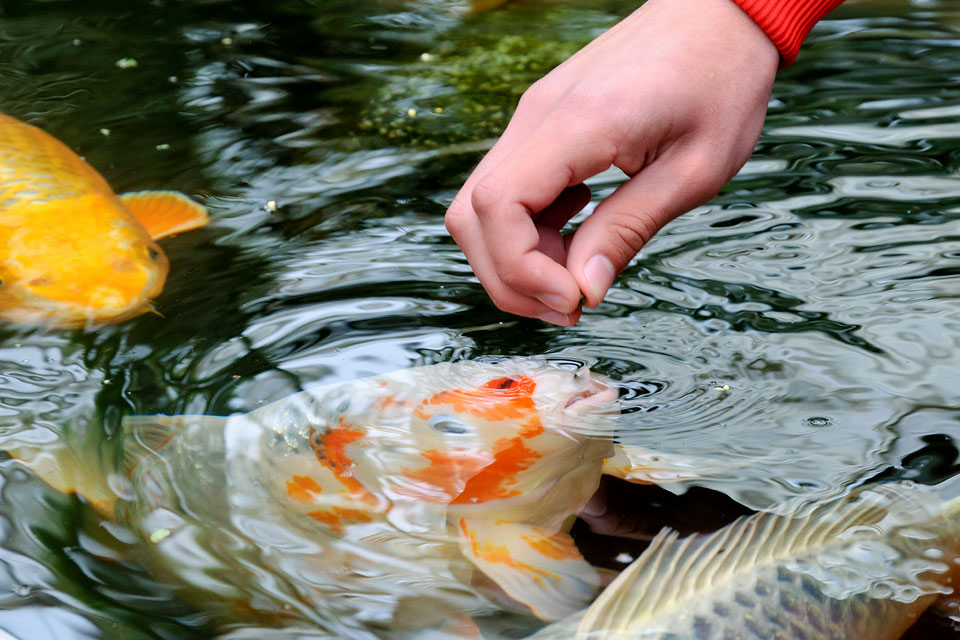 Fish Food Market Showing Footprints for Strong Annual Sales | Kyorin Food Industries, Avanti Feeds, Shishi He Deming Seafood