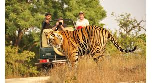 Wildlife Tourism Market: Maintaining a Strong Outlook - Here\'s Why