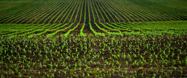 Digital Agriculture Market 2020 Global Industry – Key Players, Size, Trends, Opportunities, Growth- Analysis to 2026