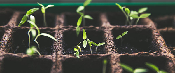 Indoor Farming Technology Market 2020 Global Rapid Growth, Competitive Analysis, Industrial Landscape And Forecasts To 2025