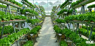 Indoor Farming Technologies Market 2020: Global Analysis, Industry Growth, Current Trends and Forecast till 2026