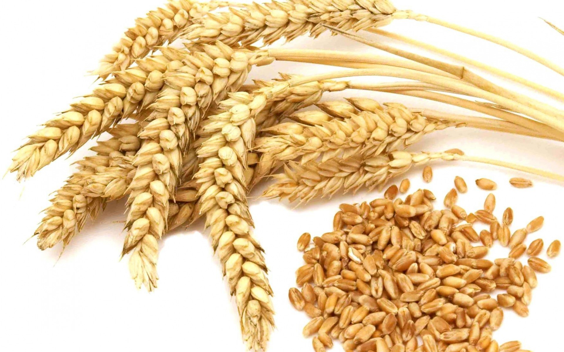 Wheat Market Report, Price Analysis, Size, Share, Industry Growth, Trends, Outlook, Forecast 2020-2025