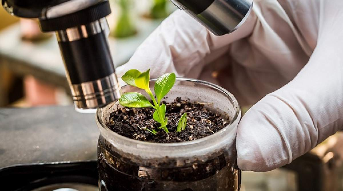 Plant Bio Stimulants Market 2020: Global Key Players, Trends, Share, Industry Size, Segmentation, Opportunities, Forecast To 2026