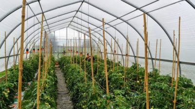 Greenhouse Horticulture Market 2020: Global Analysis, Industry Growth, Current Trends and Forecast till 2025