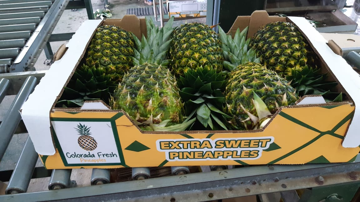 Colorada Fresh Pineapples is boosting the Immune Systems of Europeans during the Coronavirus Crises