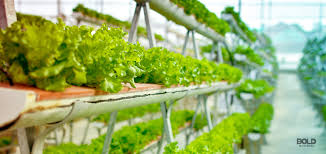 Indoor Farming Market Growth Holds Strong; Key Players studied Netafim, Lumigrow, Logiqs