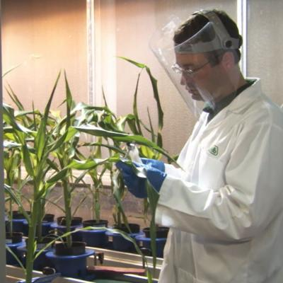 Avi Karn Kerendian Panzea Plant Biologist