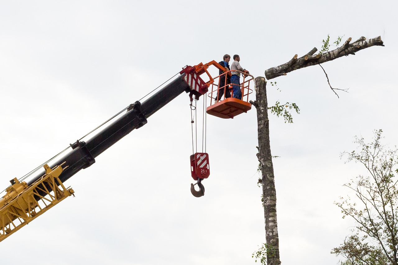 Edmonton Tree Company, Elite Edmonton Tree Removal, Launches New Website To Enhance Customer Experience In Edmonton, Alberta
