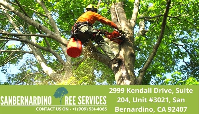 San Bernardino Tree Services' Expansive List of Services Ranks Among the Area's Best