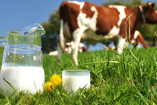 Global Organic Dairy Market to be Driven by Increasing Health Consciousness in the Forecast Period of 2020-2025