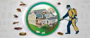 Reliable Pest Control Services in Dubai with Ensure