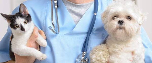 Petcare Software Market 2020 Global Industry - Key Players, Size, Trends, Opportunities, Growth- Analysis to 2026