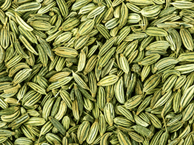 Fennel Seeds Market Boosting the Growth Worldwide | Agrocrops, Dhaval Agri Exports, Milan Seeds