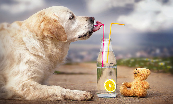 Thanesix.Com, a Dog-Only Website Provides Helpful Guides on Nutrition and Canine Care