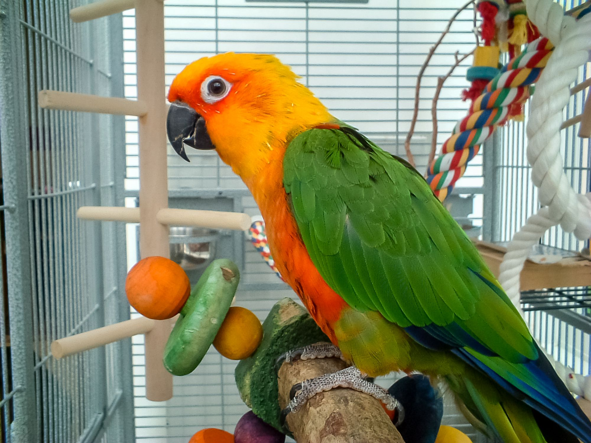 Pet Parrot Becomes the Savior for Owner