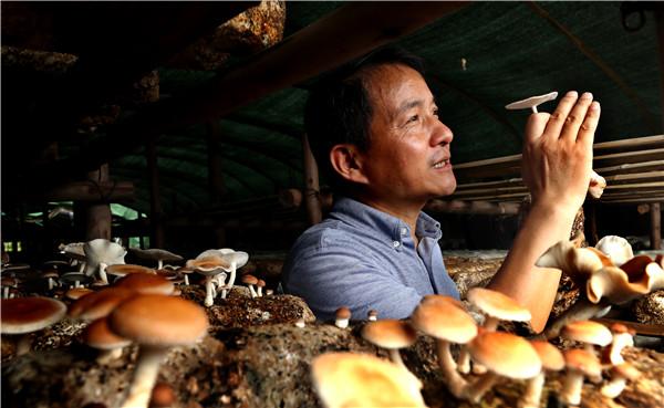 Fragrant mushrooms revitalize poor area