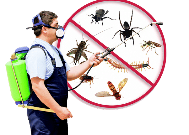 Pest Control Harrow Providing Total Pest Control Awareness to Keep the Periphery Safe and Free From Pests