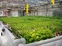 Aquaponics Market looks to expand its size in Overseas Market with Leading Manufacturers like : PFAS , EcoGro , Aquaponic Lynx  , Aquaponics Place