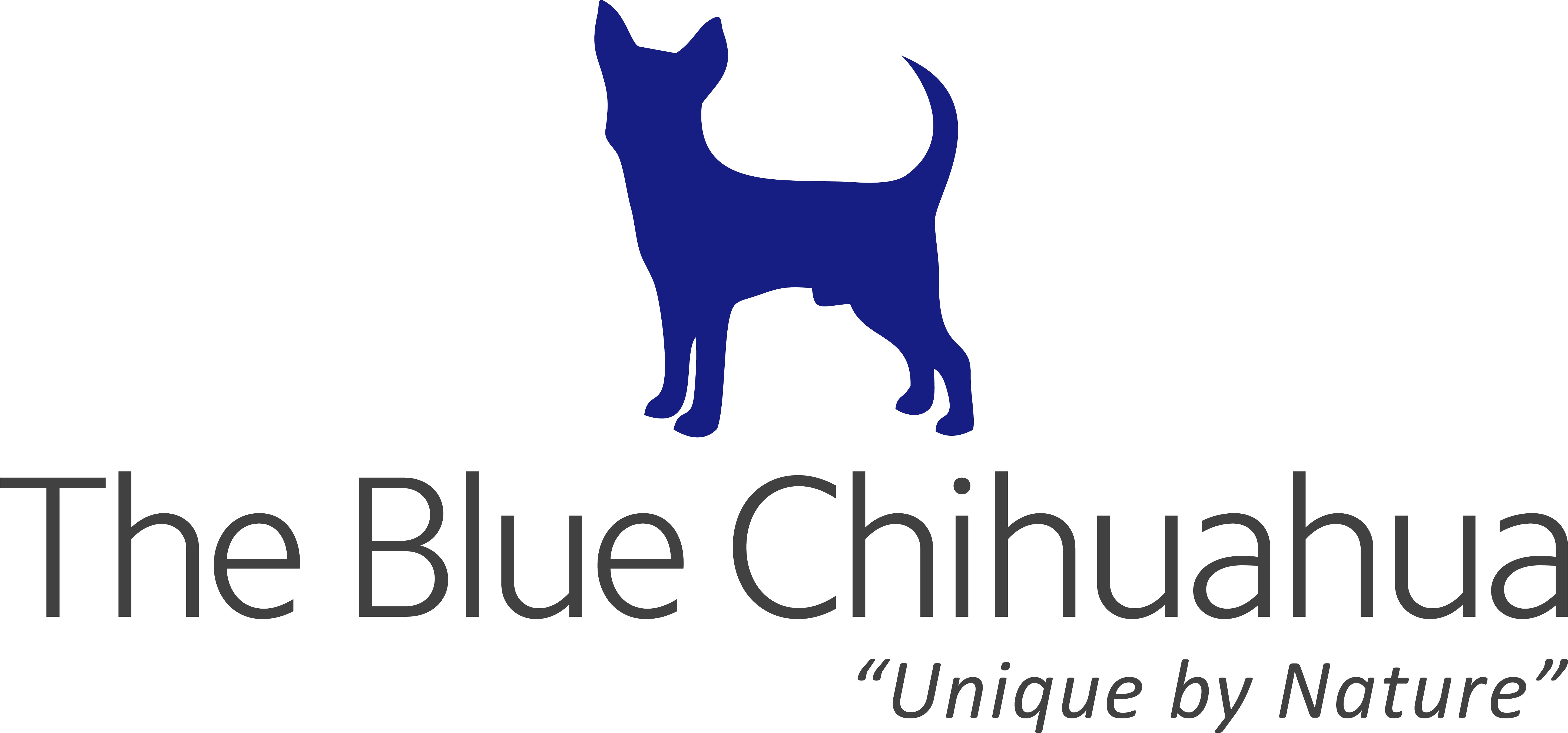 The Blue Chihuahua To Launch Website Soon, Prepares Massive Treasure Hunt For Users
