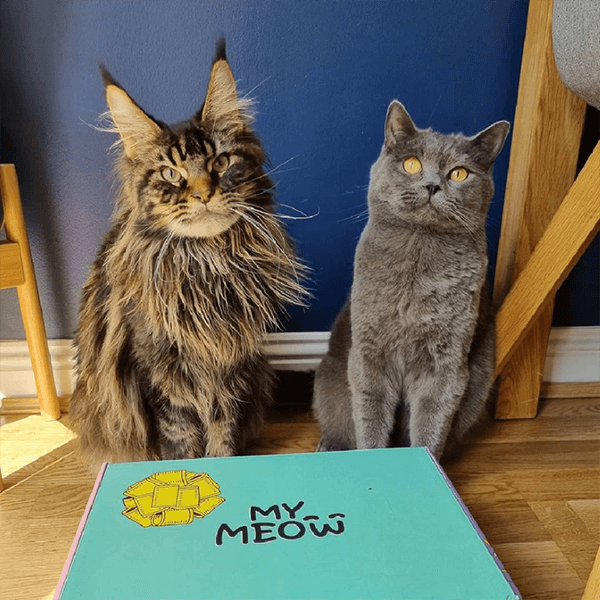 Founders Of British Dog Brand Wufwuf Announce Sister Mymeow Package